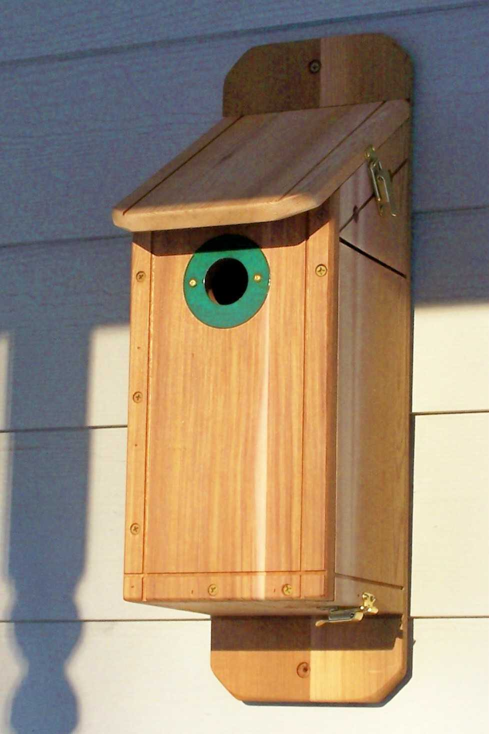 large bluebird house pic